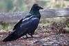 Raven8986