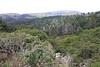 Pt. Reyes Nat'l Seashore - Inverness Ridge
