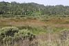 Olema Marsh looking northwest