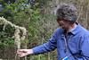 "Joe Mueller describes Usnia, a lichen sometimes called ""old Man's Beard"" in Pt. Reyes"