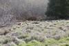 Bunch Grass of the Coastal Prairie