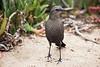 Blackbird9657