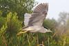 Heron1150