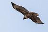 Hawk8813(8x12)