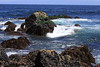 Unprotected rocky intertidal  has rocks of granite covered in California Mussels in Pacific Grove, CA on May 11, 2019