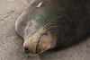Sleeping Sea Lion, Monterey Bay, Calif. on May 10, 2019