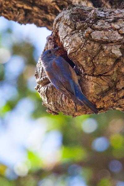 Bluebird7241