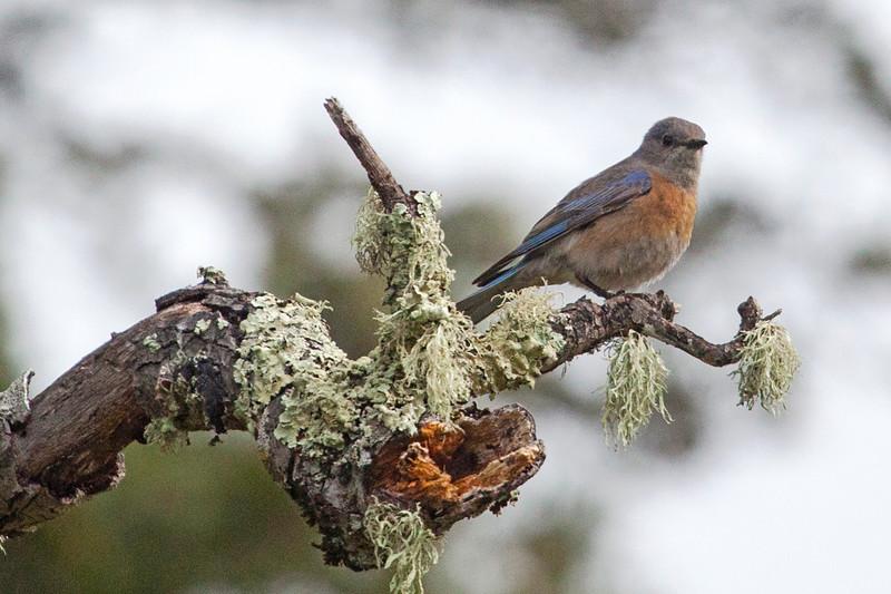 Bluebird4005