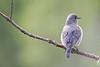 Bluebird4007