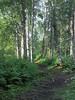 Alaska Trail