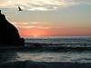Bird at Sunset on Pfeiffer Beach