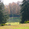 Blandy Arboretum