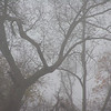 Early morning fog encases the old trees giving an erie tone to the woods behind my in-law's house.