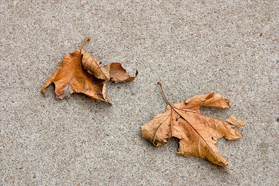 Two Leaves 0n Sidewalk. I read somewhere that the best photographs are sometimes right at your feet. This one made me fall in love with minimalism.