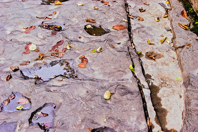 Puddles in Stone