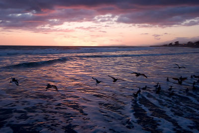 Gulls at Sunset-Carpinteria Beach, Color Enhanced