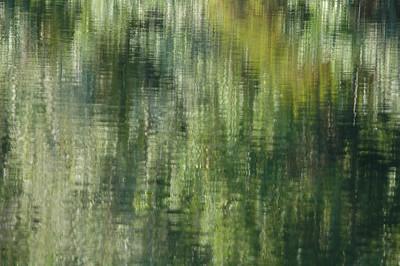 Treeline reflections.