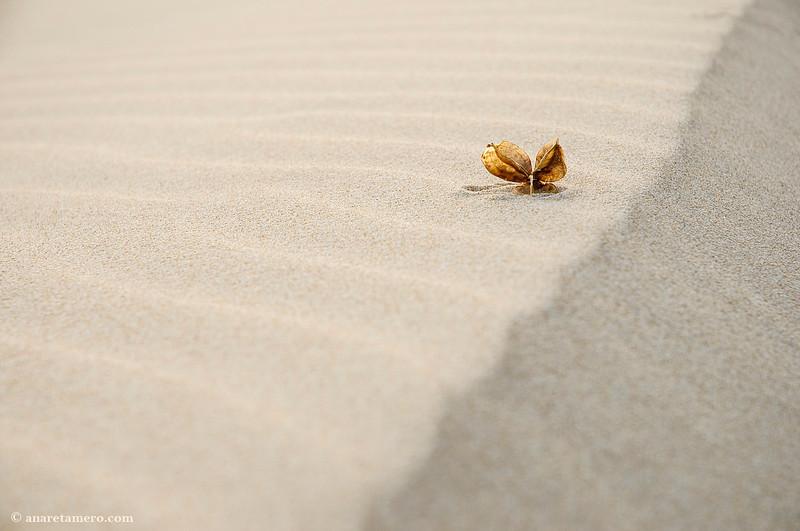 Costillas de arena