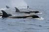 Orcas en el Estrecho de Gibraltar