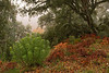 Torvisco <em>(Daphne gnidium)</span></em> en el bosque (invierno)