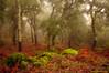 Parque Natural de Alcornocales en invierno