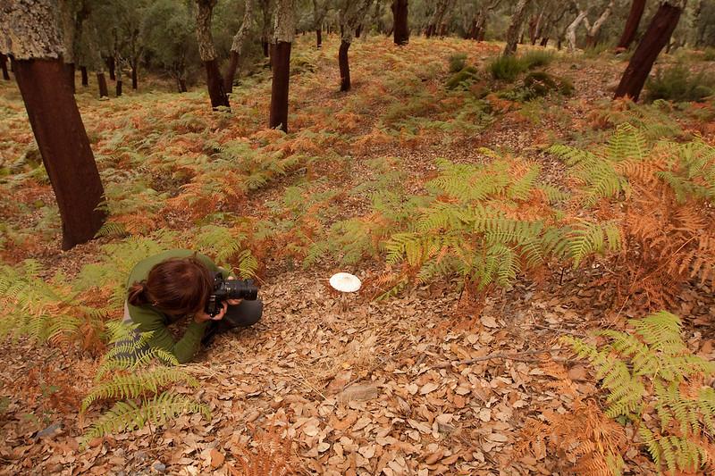 Yo, fotografiando <em>Macrolepiota</span></em> en el bosque