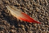 A symbol  (halite crystals and flamingo feather in a salt pan)
