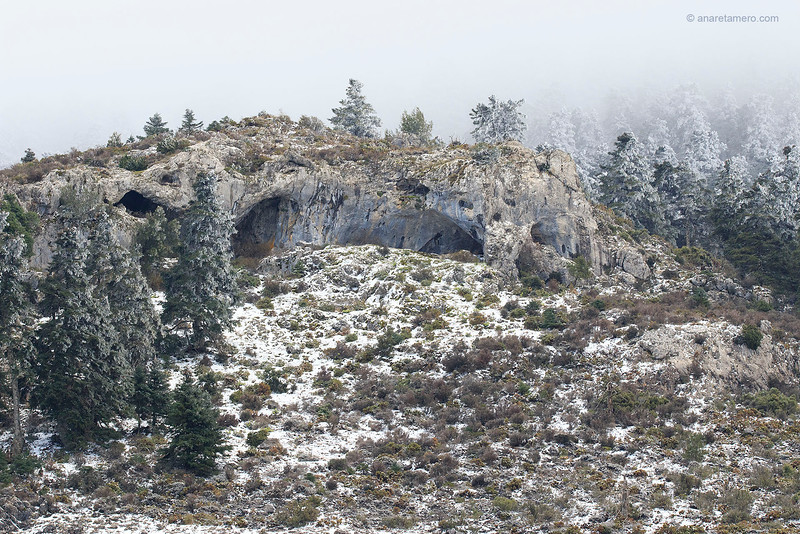 Pinsapos nevados y cuevas