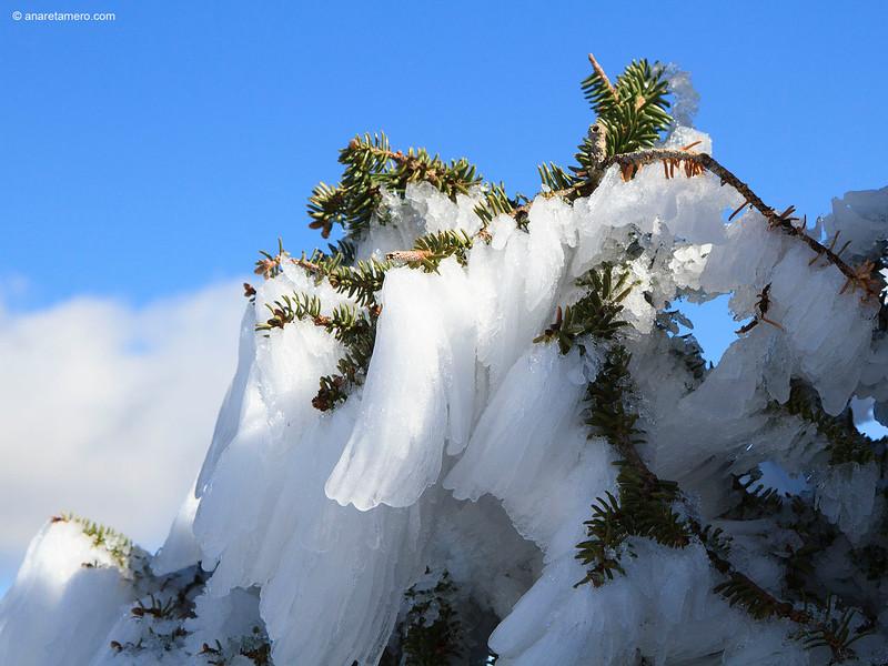 Formas del hielo en pinsapo