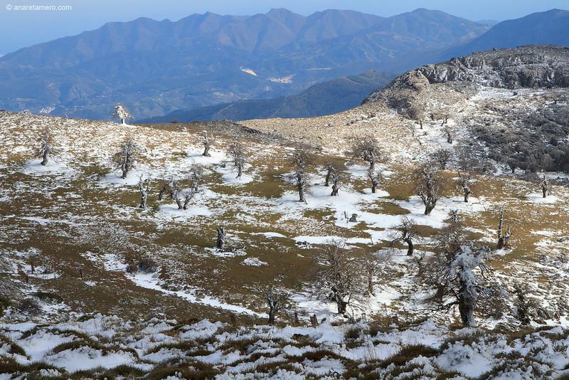 Quejigales y Sierra Bermeja.