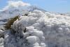 Enebro nevado y Pico Torrecilla