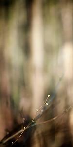 Spring Hoosden
