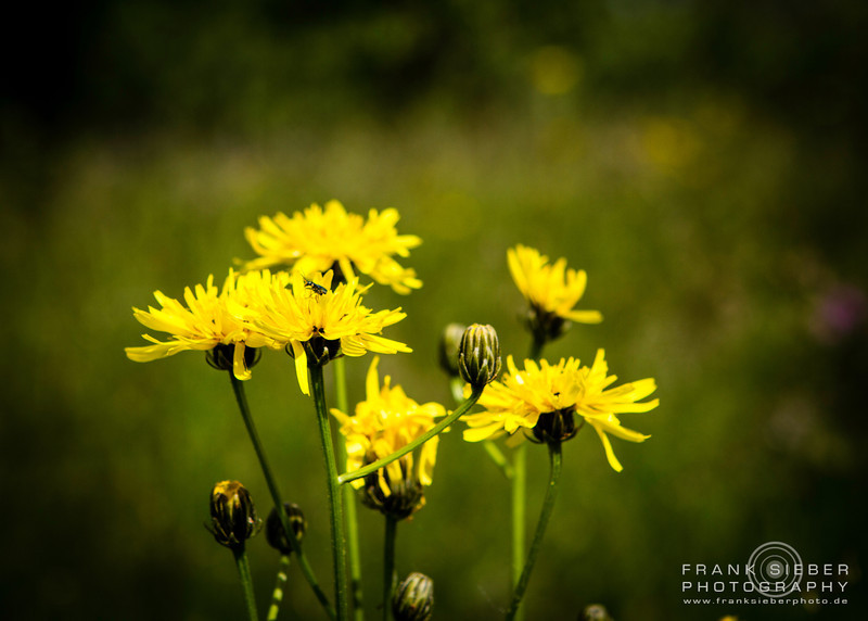 Nature - Flowers & Colors