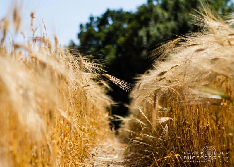 Nature - Ostsee 07.2013