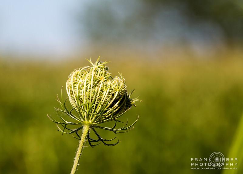 Nature-08