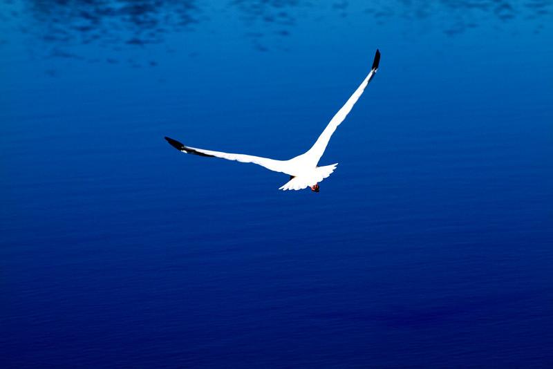 IMAGE: http://www.perrydevenecia.com/Nature/Nature-1/IMG3747/726784085_uJiNx-L-1.jpg
