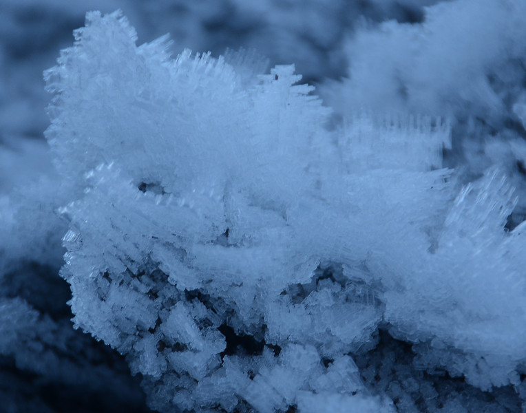 Hoar Frost along Quinault R.