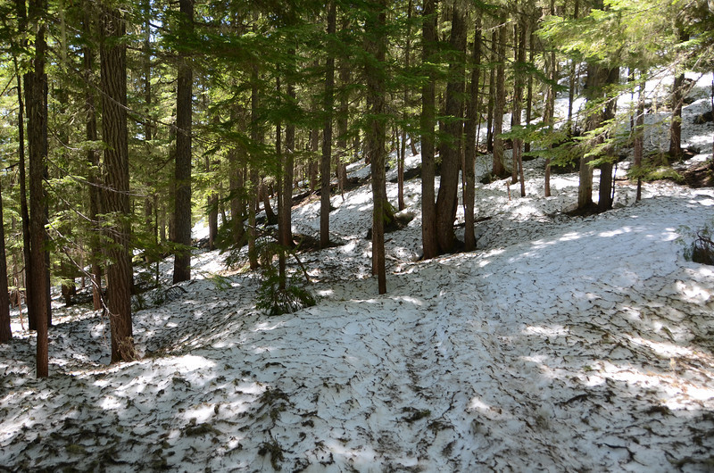 Rainier - Rampart Ridge Trail