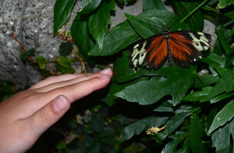 Mara loved the butterflies!