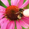 Bee Stroking!