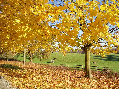 Golden Trees, Copped Hall Estate, Epping, Essex.