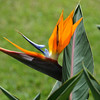 Bird of Paradise, Pearl Harbor National Monument