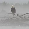 Bald Eagle Preserve, Tsirku River, Haines, AK