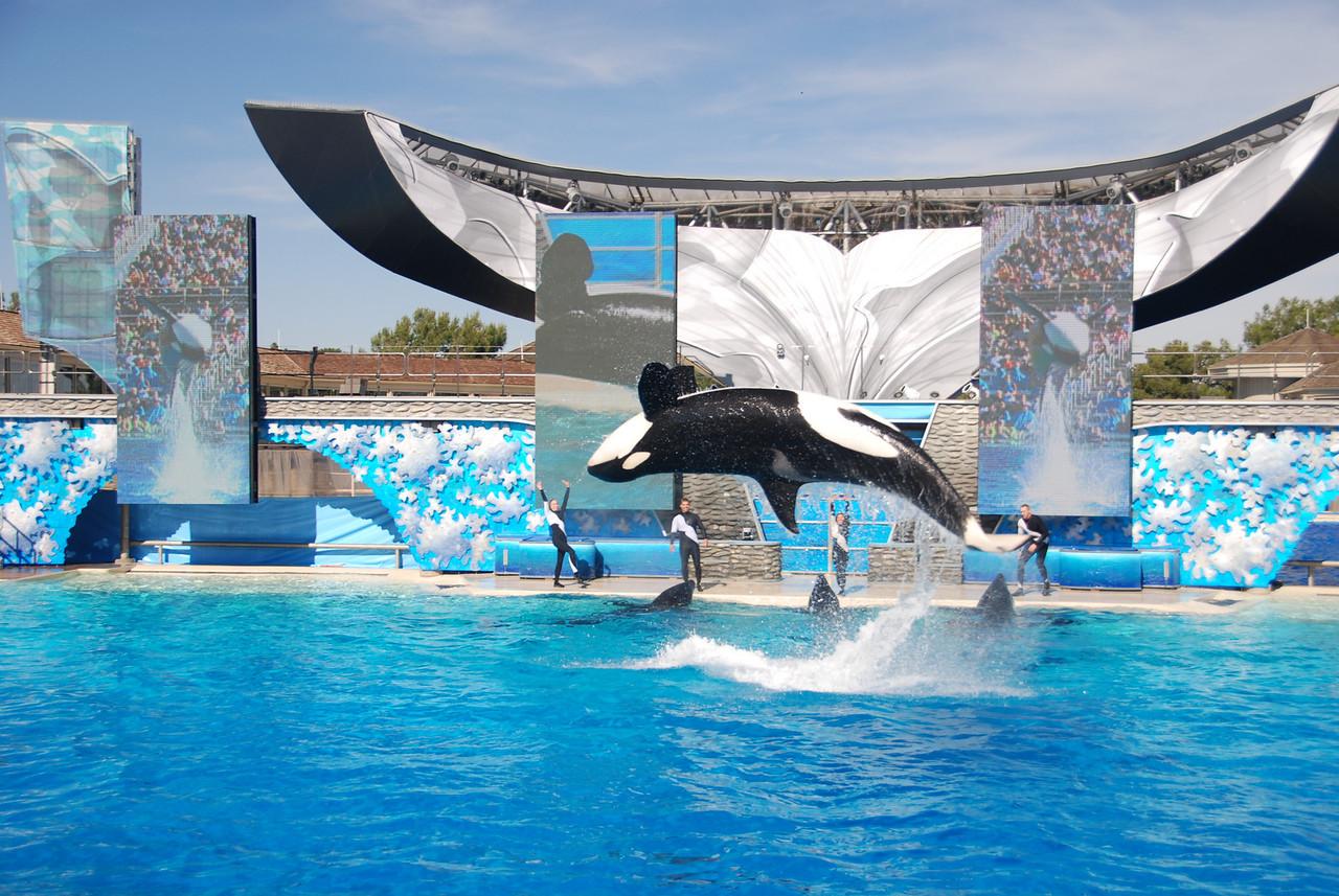 ucan balina