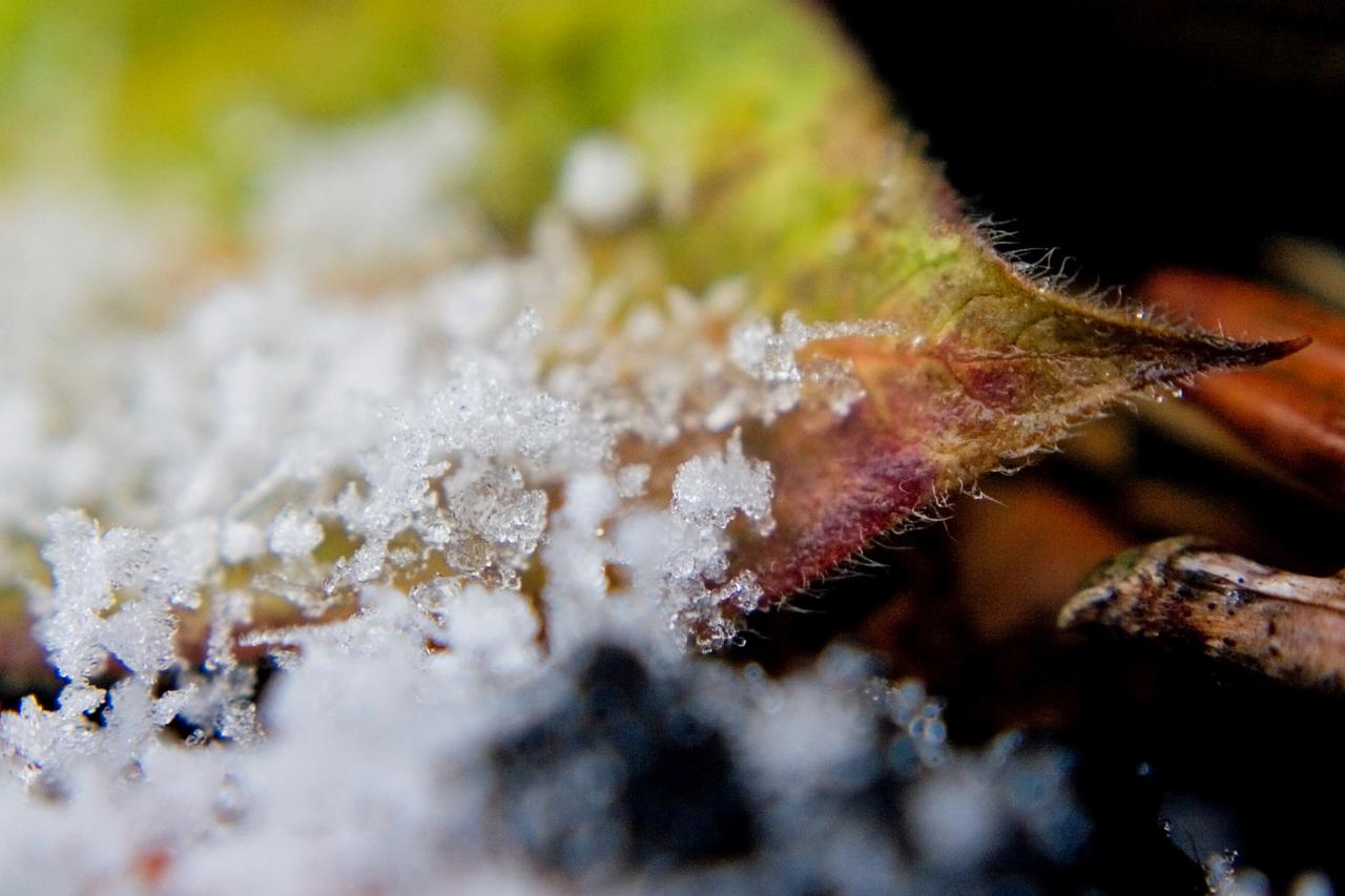 December 4 - Snowflakes