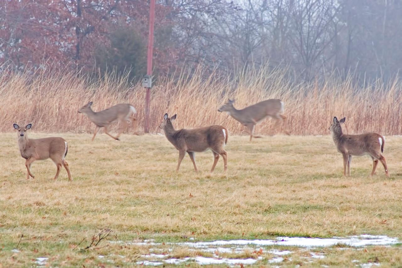 January 17 - Rock Springs, Macon County Illinois