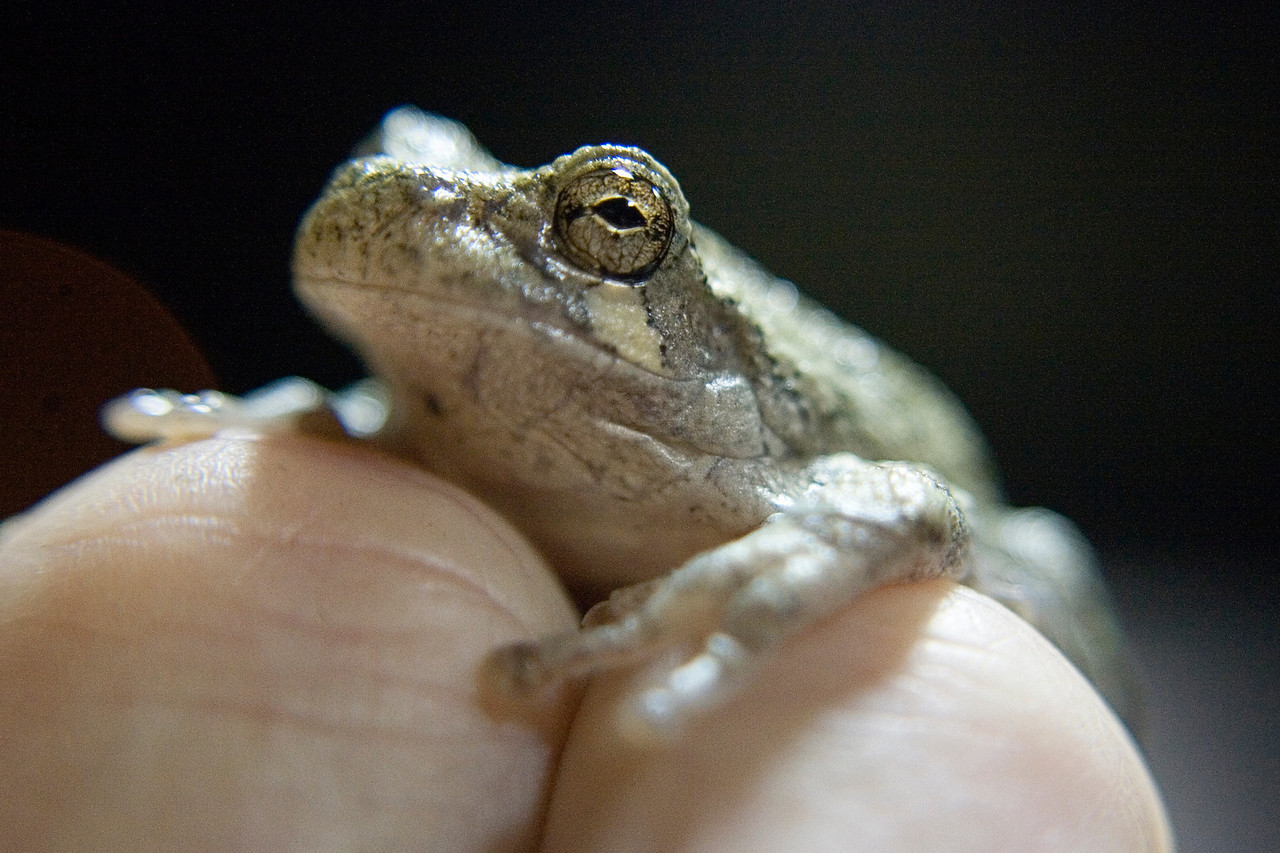 August 20 - Tree Frog