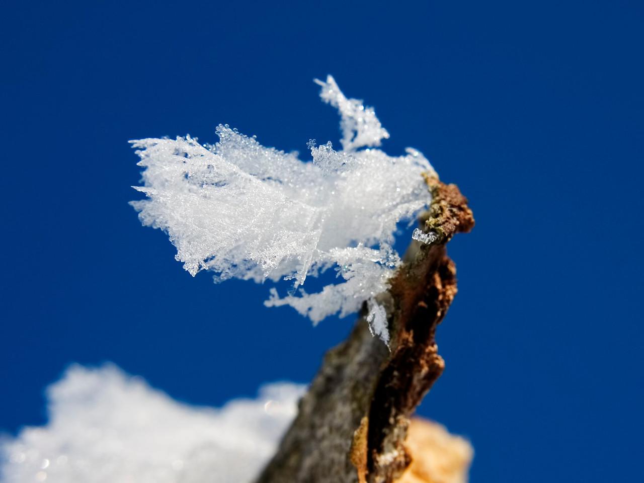 February 13 - Hoar Frost