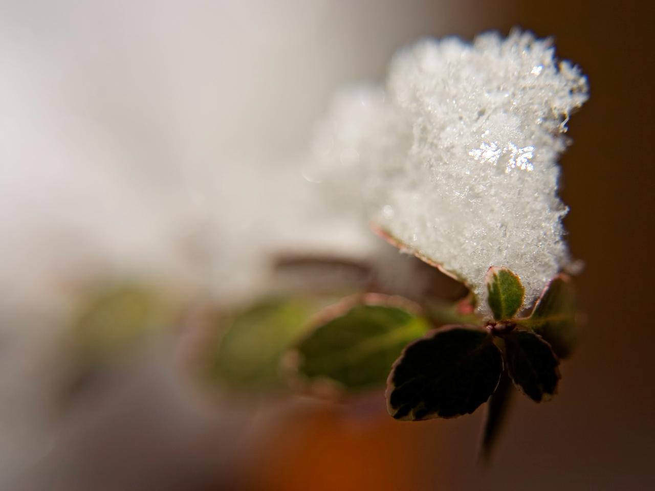 December 25 - Snowflakes