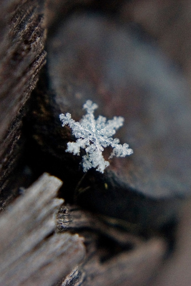 December 5 - Snowflake vs. Nail Head